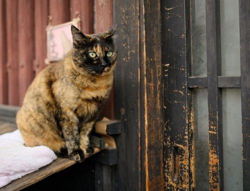 2/2放送 猫目線で鞆の浦を散策